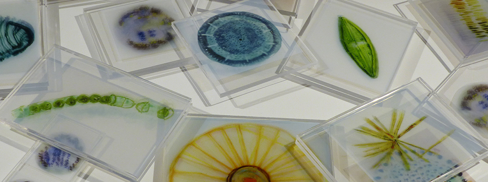 Isabel Beavers Artic and marine diatoms plexiglass, digital prints on transparencies made from scanned oil paintings on vellum